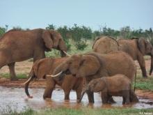 Elephants at a Tsavo East watering hole